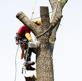 tree-felling